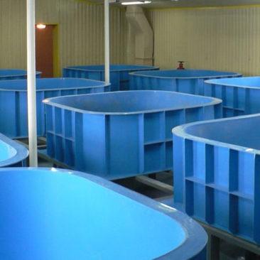 Ёмкости для выращивания рыбы
