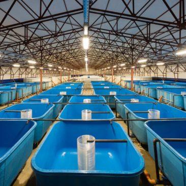 Бассейны для рыбы из стеклопластика