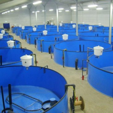Бассейны для рыбы из полипропилена